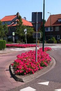 Parfums et couleurs avec les roses dans les espaces publics