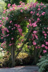 Arche pour rosiers pour de la romance au jardin